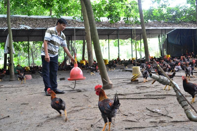 Người nuôi gà ta thành công nhất vùng