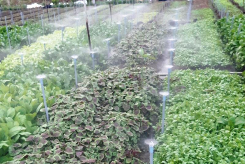 Nông dân Nguyễn Đình Thao: Mạnh dạn đổi mới kỹ thuật trong lao động, sản xuất với mô hình tưới nước nhỏ giọt