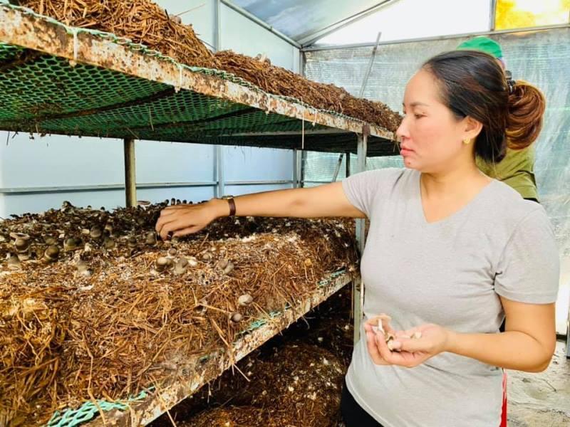 Khởi nghiệp bằng mô hình trồng nấm rơm trong nhà kín